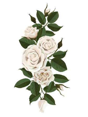 White roses flowers, buds and leaves. Vector illustration isolated on white background (there is no gradient fill and mesh).
