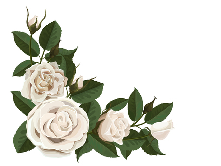 decorate element: White roses buds and green leaves. Corner composition. Element to decorate greeting or wedding cards in the corner of the sheet. Vector flowers isolated on white background.
