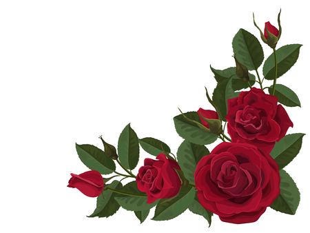 Red roses buds and green leaves. Corner composition. Element to decorate greeting or wedding cards in the corner of the sheet. Vector flowers isolated on white background.