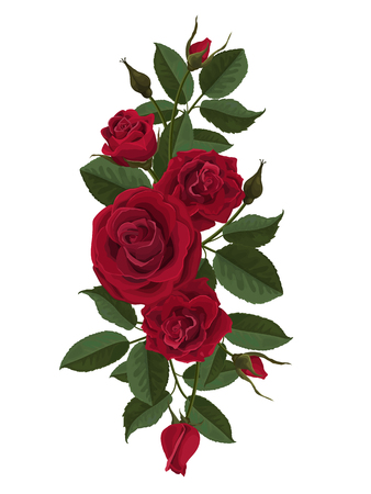 Red roses flowers, buds and leaves. Vector illustration isolated on white background (there is no gradient fill and mesh).