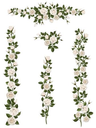 白バラの花と葉や芽のクライミングの枝。アート ブラシとして使用できる要素 (比率) のいずれかを作成するカール フォーム。バルコニー外壁、フェンス、壁、カードを飾る。
