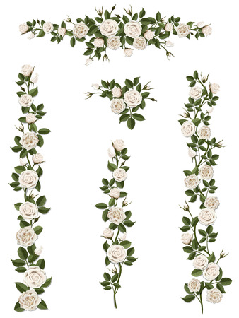 Rami rampicanti rosa bianca con foglie e boccioli. Gli elementi possono essere utilizzati come un pennello artistico (scala proporzionalmente) per creare qualsiasi forma arricciata. Per decorare le facciate del balcone, recinzione, muro, carta. Archivio Fotografico - 52404178