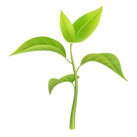 Green sprout, small branch young plant, vector illustration, isolated.