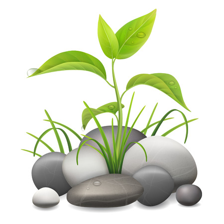 white pebble: Realistic sprout. Young plant growing among grass and stones.