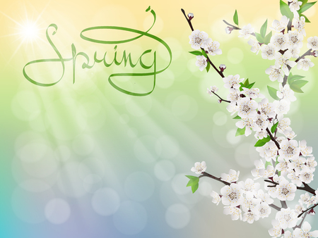 sun flowers: Cherry spring branch with white flowers, sun rays and glare template for greeting card.