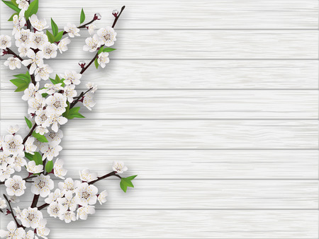 cherry wood: Spring blooming cherry branch on white old wood background.