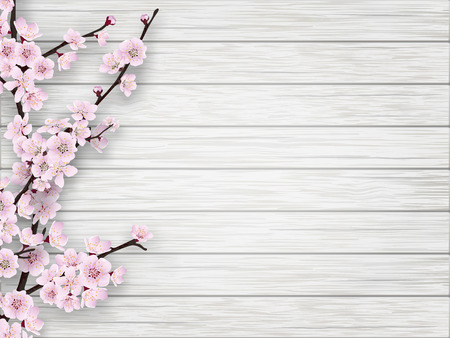 cherry wood: Pink cherry blossom branch on white old wood background. Illustration