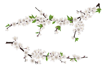 Set of spring blooming tree branches, tree branch with white flowers and leaves.
