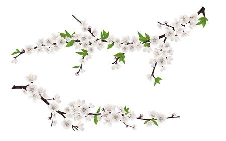 Zestaw wiosną kwitnących gałęzi drzewa, gałąź drzewa z białymi kwiatami i liśćmi.