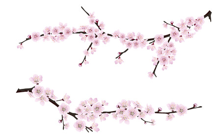 Set of spring blooming tree branches, tree branch with pink flowers. Sakura or cherry.