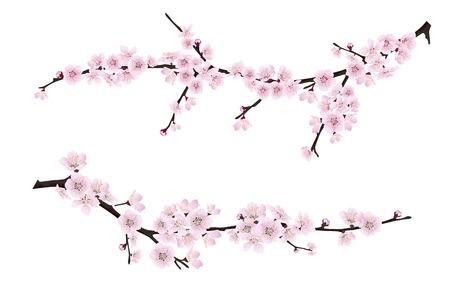 pink flowers: Set of spring blooming tree branches, tree branch with pink flowers. Sakura or cherry.