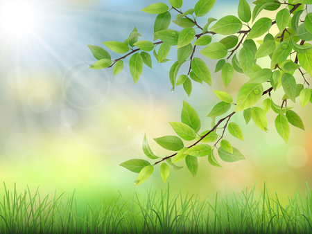 Green leaves with water drops and grass. The sun rays shine through the branches of trees. Summer morning calm nature scene.