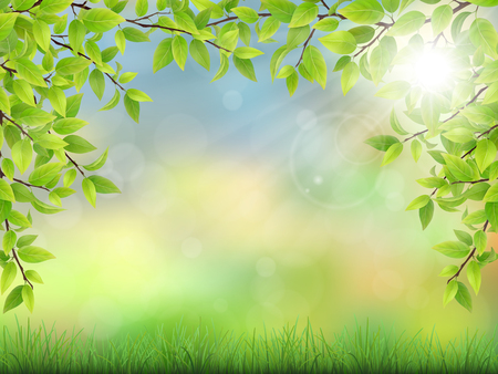 summer trees: Summer background with green leaves and grass. The sun rays shine through the branches of trees. Realistic detailed illustration.