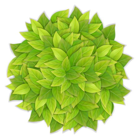 Ball of green leaves. Realistic detailed vector illustration.