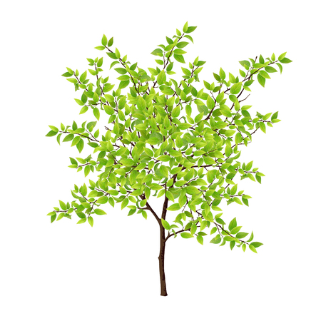 Detailed tree with green leaves. Leaves made using mesh tool.