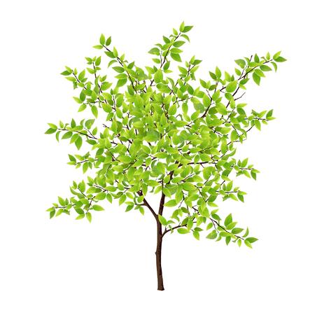 Gedetailleerde boom met groene bladeren. Bladeren gemaakt met behulp van maaswerktuig.