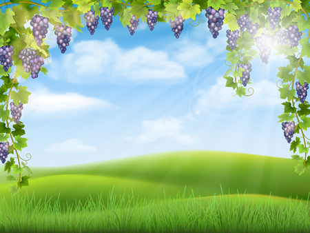 bunches: Bunches of grapes like frame on the background of the rural landscape with valley, hills and sky.