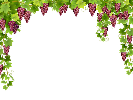 Frame from hanging bunches of ripe red grapes with branches and leaves.