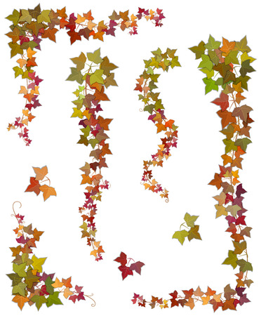 verdant: Hanging branches of autumn ivy with green, yellow and red leaves. Set of floral decorative elements isolated, on a white background.