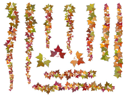 Set of autumn vector ivy branches, growing from the top downwards and upwards. This elements can be used as a Art Brush to create of any curled from for decorate card, frames and corners.