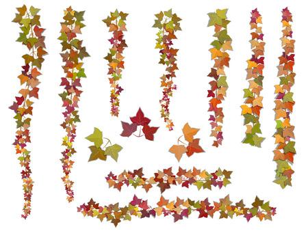 Set Herbst Vektor Efeu Zweige, von oben nach unten und oben wachsen. Diese Elemente können als eine Art Pinsel verwendet werden, zu schaffen, die jede gelockt von dekorieren Karte, Rahmen und Ecken.