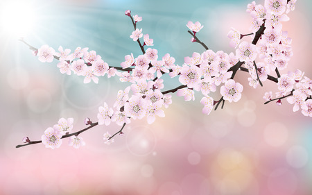 Spring blossom cherry tree branches with pink flowers. On blurred pink, blue background. Stock Illustratie