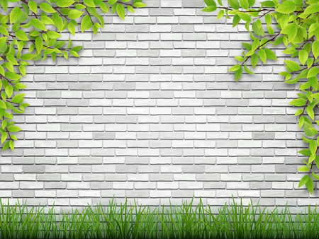 tree grass: tree branch and grass on white brick wall