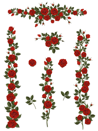 Branches climbing scarlet rose flower with leaves and buds. Elements can be used as a Art Brush to create of any curled form. To decorate the balcony facades, fence, wall and gift or wedding card.