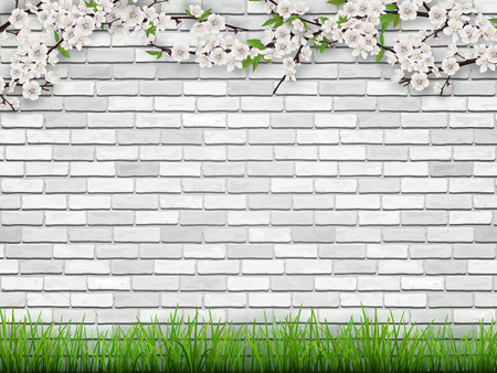 Blooming tree branch with flowers and green leaves on white brick wall background. The grass in the foreground. Spring vector background. Illustration