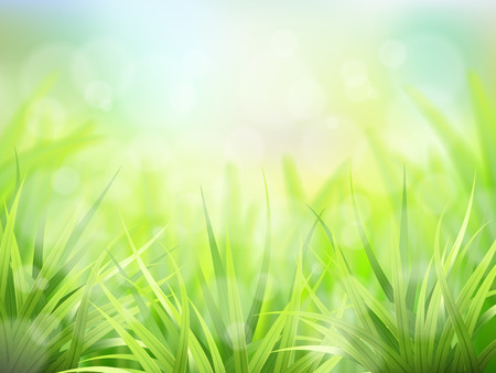 grass blades: Vector spring background with fresh green grass. Detailed stems of the plant  and effect bokeh. Illustration