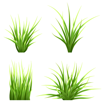 grass blades: Set realistic vector  grass. Bush of fresh grass of various shapes. Isolated element for design, nature landscape illustration.