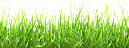 Super realistic, detailed fresh green vector grass. Seamless isolated plant stems for front plan nature illustration. Gradient mesh tool.