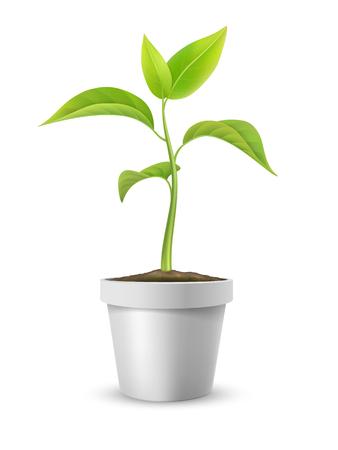 crecimiento planta: Planta joven en una maceta. Símbolo de crecimiento, desarrollo o ecología. Ilustración vectorial detallado, aislado en fondo blanco.