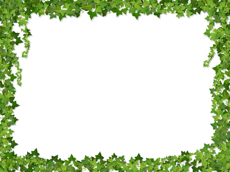 Square decorative frame of ivy branches,  isolated on white background. Illustration