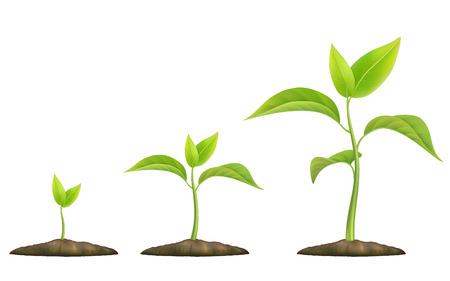 crecimiento planta: Etapas de crecimiento de la planta. Brote verde crece desde el suelo. ilustración vectorial realista. Simboliza la vida y el desarrollo y la ecología. Vectores