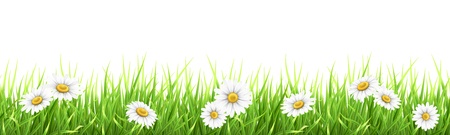 Grass and chamomile. High detailed vector illustration.