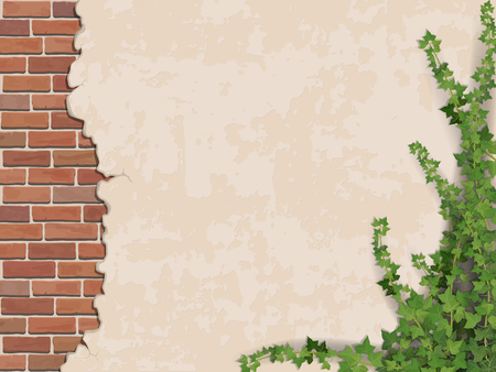plaster wall: Ivy on weathered wall background with brick masonry.  Vector realistic illustration.