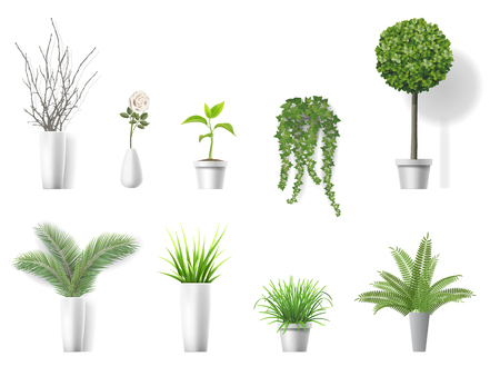 Set of vector realistic detailed house plant for interior design and decoration. Stock Illustratie
