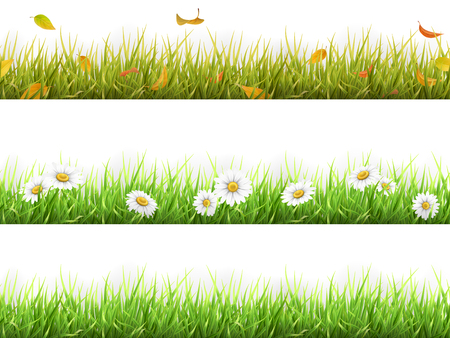 Grass with fallen leaves, with daisies, in different seasons of the year, spring, summer and autumn. Set of realistic vector elements of nature for design illustrations.