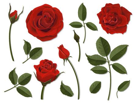 Eine Reihe von Blumenteilen. Blütenstand, Knospe und Blatt einer scharlachroten Rose. Vektor, ausführliche, realistische Abbildung, getrennt. Elemente für Blumenmuster der Grußkarte und des Blumenstraußes. Vektorgrafik