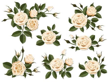 Cream colored rose boutonniere. Set for floral design of a greeting, wedding or invitation card. Bouquet of decorative garden flower. Bud, petals and leaves of plant. Illustration