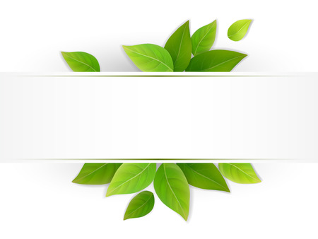 Eco banner with fresh green leaves. Blank with place for text. Realistic vector. Illustration