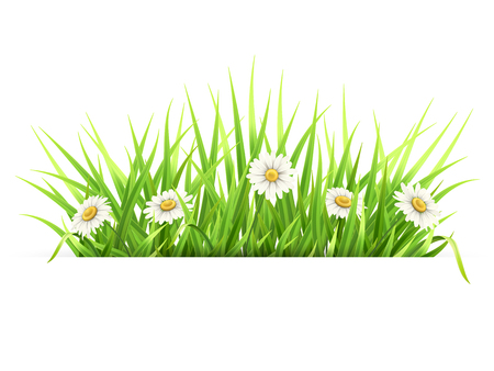 Label with green grass and daisies. White paper banner. Template for spring seasonal card.