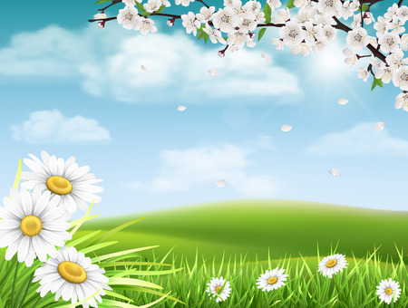 Spring landscape with a flowering branch of a tree with grass and daisies in the foreground. Illustration