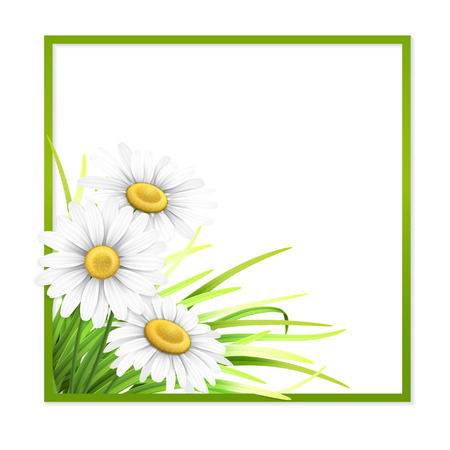 Green frame with grass and daisies and empty place for text. Vector season template for invitation or greeting card.