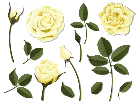 A set of flower parts. Elements for floral design of greeting card and bouquet.