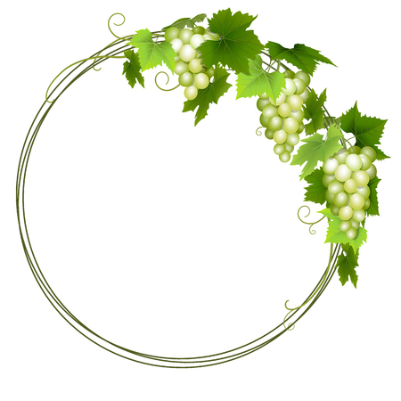 Green grapes wreath 矢量图像