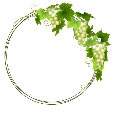 Green grapes wreath Ilustrace