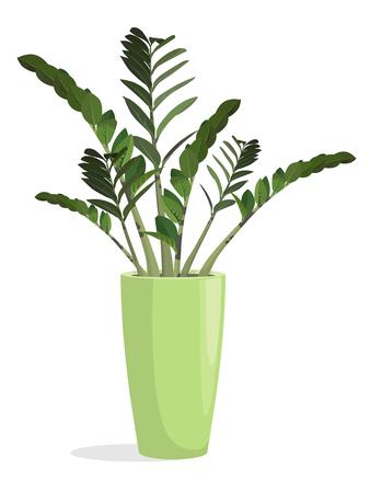 Indoor flowering plant in a pot. Zamiokulkas  Popularly called a dollar tree. Vector illustration.