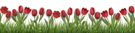 Red tulips and grass. Realistic vector illustration. Illustration